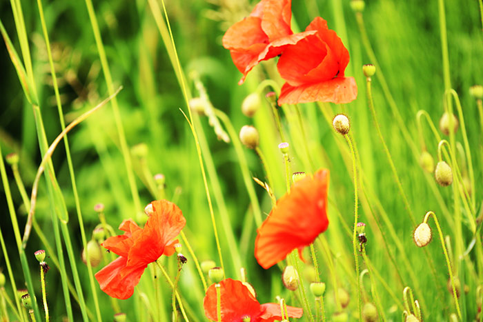 Blumenbilder Kostenlose Und Lizenzfreie Naturfotografien