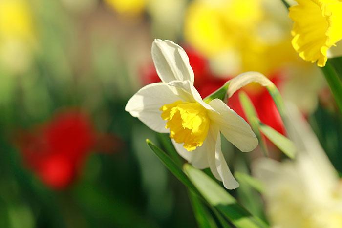 Frühlingsblumen Bilder Kostenlose Und Lizenzfreie Fotografien