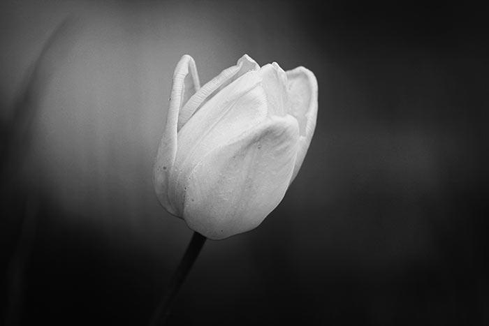 Schwarzweiss Bilder - kostenlose und lizenzfreie Naturfotografien