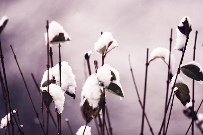 Kostenlose Winterbilder Schnee Landschaften Natur Weihnachten