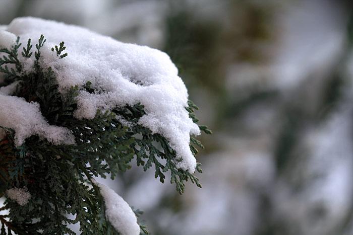 Weihnachtsbilder Tannenzweig.Winter Bilder Naturbilder Schnee Kostenlose Lizenzfreie