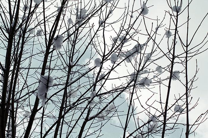 Winter Bilder Naturbilder Schnee Kostenlose Lizenzfreie